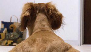 【話題】『うちのお犬様撮ったんだけど、なんか…肩幅すごい人みたいに見えてまともに見れないんだが…』