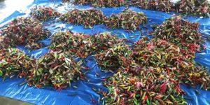 【話題】『エギ16000個… うちの地区の漁師さんが集めただけでこれ。釣り人は反省して下さい』