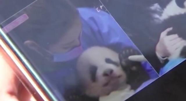 韓国の4人組ガールズグループ「ブラックピンク」、パンダの扱い悪いと中国で批判 → 番組が放送中止に…