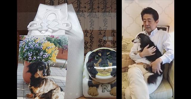 安倍前首相の愛犬ロイ、亡くなる… 安倍昭恵さん「ロイ、19年6ヶ月の命を全うして天に召されました…」