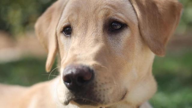 【約550万円】愛するペットをクローンに 飼い主の間で人気上昇、批判の声も