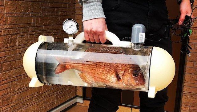 【話題】『活魚バッグ正式販売されたら絶対買う』