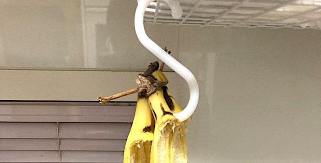 【話題】『地震のせいでバナナ全部落ちたw』
